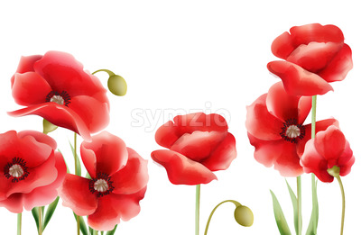 Poppy flowers on isolated background. Place for text. Watercolor. Vector Stock Vector