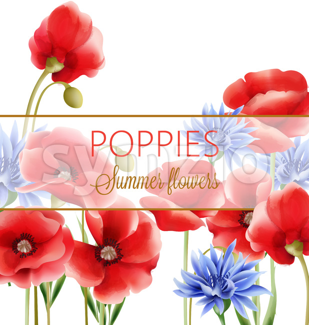 Summer flowers greeting card with blue cornflower and poppies. Watercolor. Vector