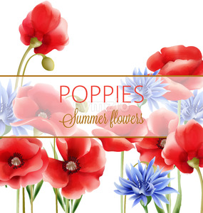 Summer flowers greeting card with blue cornflower and poppies. Watercolor. Vector Stock Vector