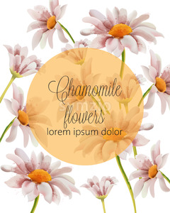 Chamomile flowers card with place for text in a golden filled circle. Watercolor. Vector Stock Vector