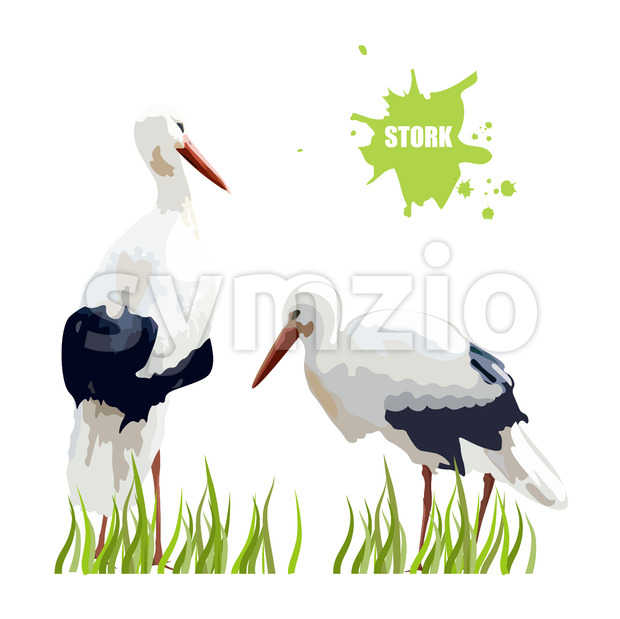 Watercolor stork birds sitting in the grass. Vector Stock Vector