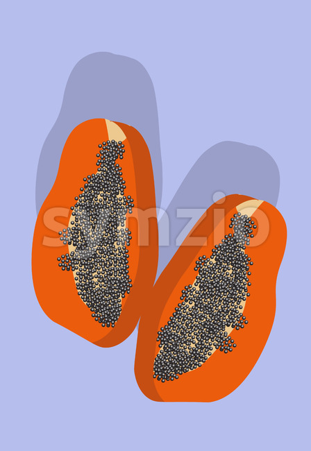 Composition of two slices of papaya fruit on purple background. Vector Stock Vector