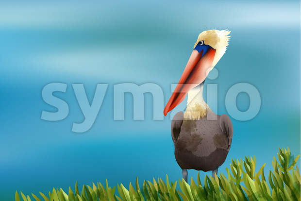 Colorful pelican sitting in grass on ocean background. Vector Stock Vector