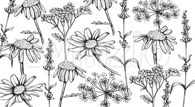 Chamomile, lavender and herbal flowers in line art style. Vector Stock Vector