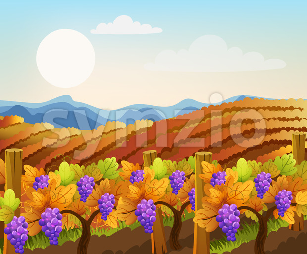 Peisage of empty and filled with grape trees fields. Vineyard. Autumn plant. Warm colors. Vector Stock Vector