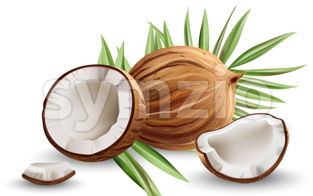 Whole and cracked open coconuts with monstera leaves. Realistic. 3D mockup product placement. Vector Stock Vector