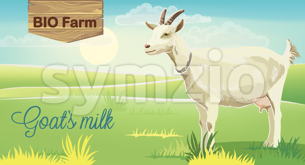 Goat on meadow with sunrise in background. Bio farm milk. Realistic. 3D mockup product placement. Vector Stock Vector
