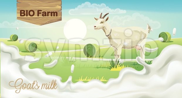 Goat on meadow with hay bales. Splashing bio farm milk. Realistic. 3D mockup product placement. Vector