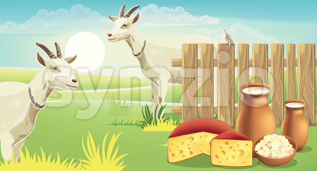 Two goats and meadow near a fence with cheese, cottage cheese and milk on the grass. Realistic. 3D mockup product placement. Vector Stock Vector