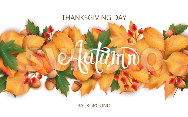 Abstract background with leaves, acorns and berries. Autumnal thematics. Thanksgiving day. Vector Stock Vector