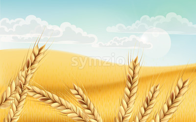 Field full of wheat grains. Blue cloudy sky. Realistic 3D mockup product placement. Vector Stock Vector