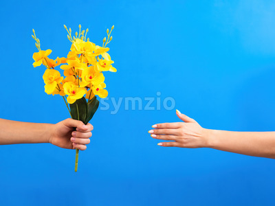 Man giving yellow flowers to a woman on blue background. Two hands. Love concept. Stock Photo