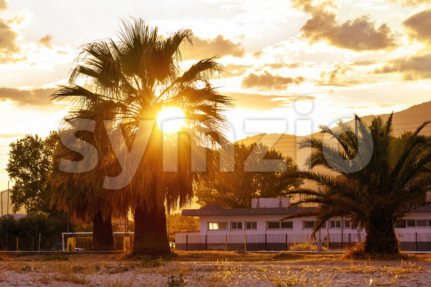 Orange sun and palm tree at sunset in Greece Stock Photo