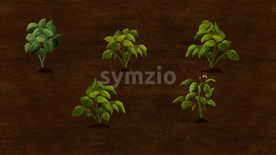 Potato plants growing in the field. Digital background raster illustration. Stock Photo