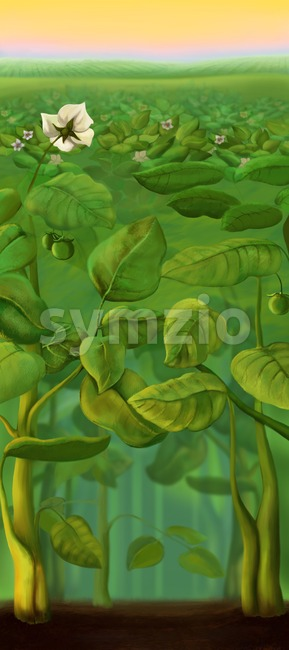 Potato and tomato growing field with potato flowers. Digital background raster illustration. Stock Photo