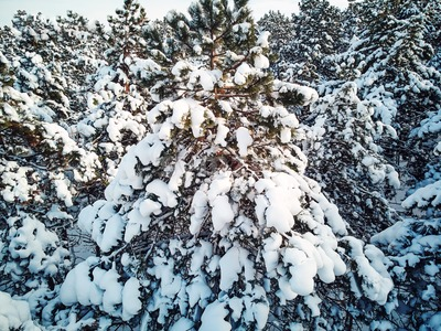 Aerial shot of Valea Morilor forest in winter season. Chisinau, Moldova Stock Photo