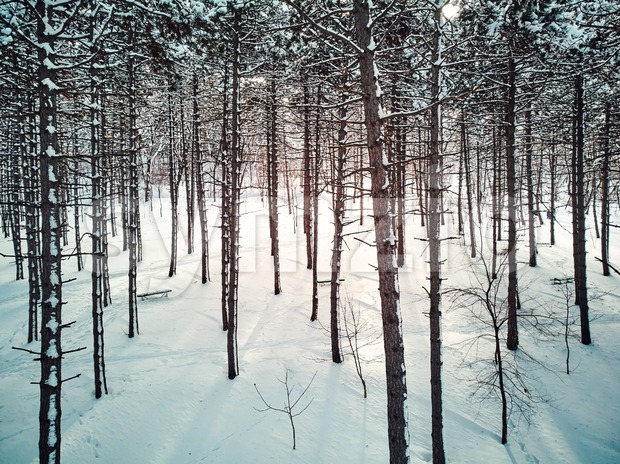 Aerial shot of the forest of Valea Morilor park covered in snow. Chisinau, Moldova Stock Photo