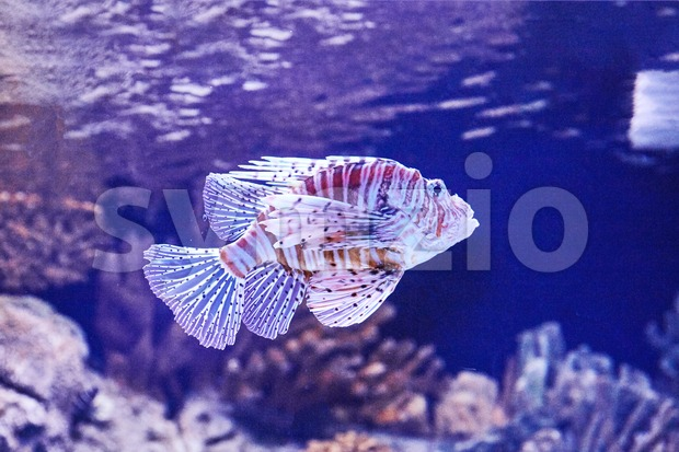 Colorful fish inside lisbon famous oceanarium. Close-up shot. Portugal Popular tourist attraction Stock Photo