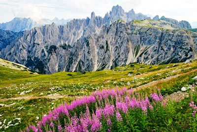 Tre Cime di Lavaredo peak at daylight. Lavender growing on foreground. Italy Stock Photo
