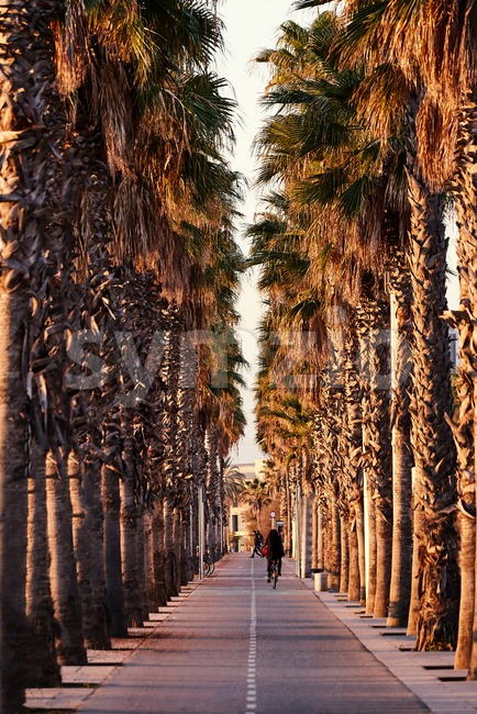 Bike path between palm trees at sunset. Girl riding bicycle. Barcelona, Spain Stock Photo