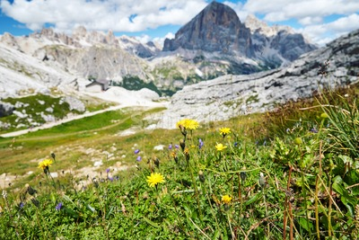 Dandelions growing in Giau Pass at daylight. Cloudy sky on background. Italy Stock Photo