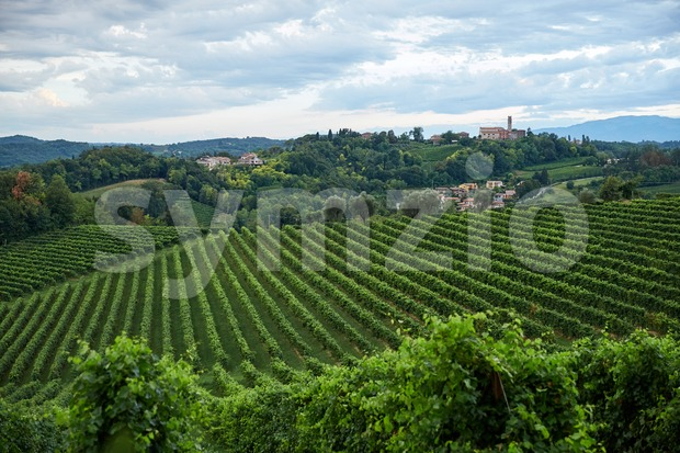 Conegliano vineyard at daylight. Cloudy sky. Italy Stock Photo