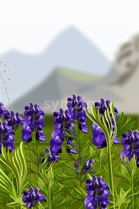 Lavender field Vector illustration. Mountains hills on background Stock Vector