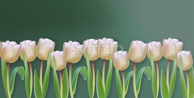 White tulip flowers Vector realistic banner. Spring season template 3d illustration Stock Vector