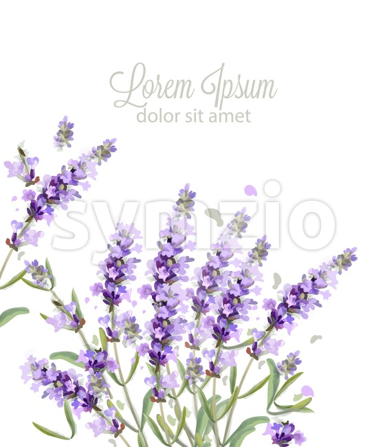 Lavender card watercolor Vector. Flowers bouquet background. Spring delicate banner. Wedding invitation, Women day, birthday template Stock Vector