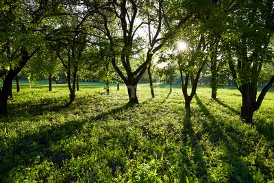 Park at daylight in spring time. Sun rays on grass. Chisinau, Moldova Stock Photo
