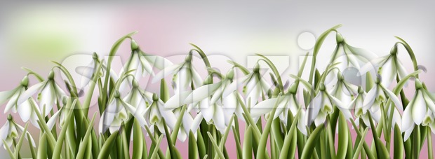 Snowdrops flowers Vector watercolor. Spring Summer trendy background
