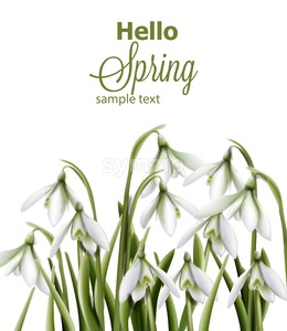 Snowdrops flowers Vector watercolor. Spring Summer trendy card Stock Vector