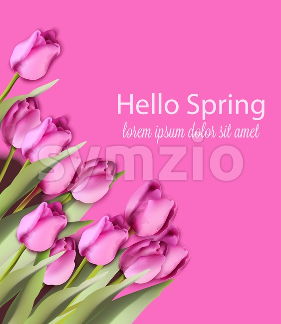 Pink tulips card Vector watercolor. Helo spring background. Season colorful floral bouquet Stock Vector