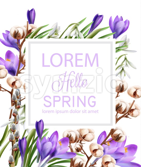 Crocus and cotton flowers Vector watercolor. Spring season delicate frame. Template design card for wedding, birthday, mother day