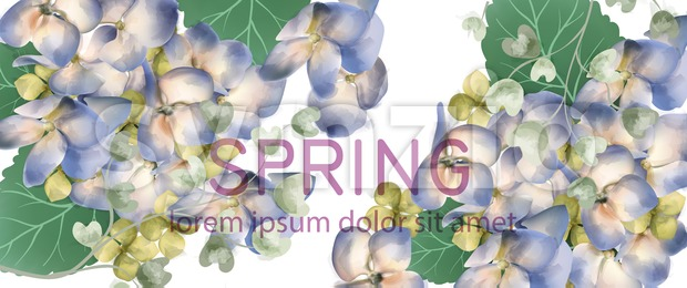 Spring hydrangea banner Vector watercolor. Romantic floral invitation or greeting card decoration. Women day, Valentines Day, sales and other events ...