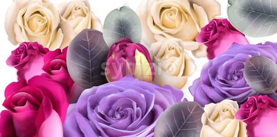 Purple roses bouquet Vector watercolor. Mother day background. Beautiful spring floral design Stock Vector