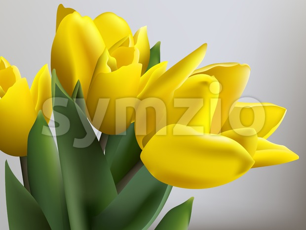 Yellow tulips spring card Vector. Beautiful natural bouquet
