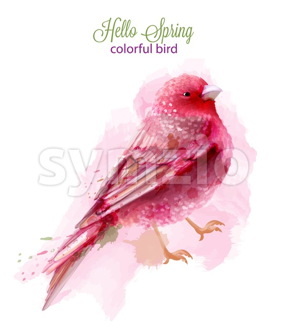Cute pink bird watercolor Vector isolated on white. Vintage design Stock Vector