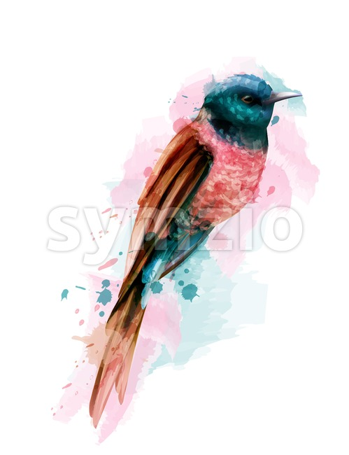 Tropic colorful small bird Vector watercolor. Cute bird illustration. blue colors splash Stock Vector