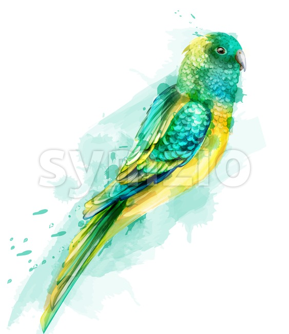 Tropic colorful parrot bird Vector watercolor. Cute bird illustration. blue colors splash Stock Vector