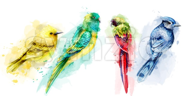 Colorful tropic birds watercolor Vector. Beautiful exotic set collection