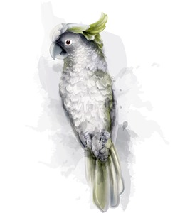 Tropic parrot bird Vector watercolor. Cute bird illustration. blue colors splash Stock Vector
