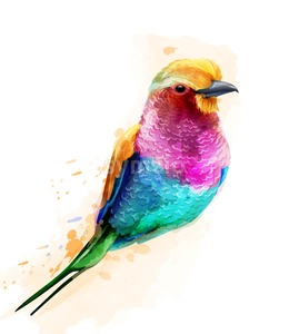 Tropic colorful bird Vector watercolor. Cute small bird illustration Stock Vector