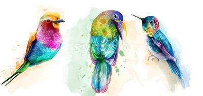 Colorful tropic birds watercolor Vector. Beautiful parrots, humming bird exotic set collection Stock Vector