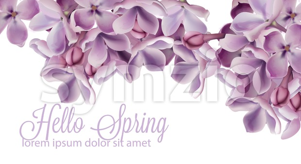 Hello spring background with purple lilac flowers Vector watercolor. Romantic floral wedding or greeting card decoration. Women day, Valentines Day, ...