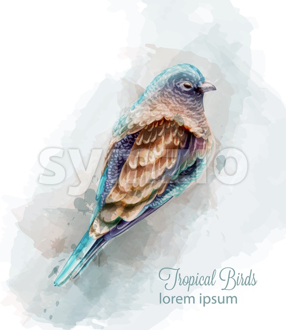Tropic colorful bird Vector watercolor. Cute small bird illustration